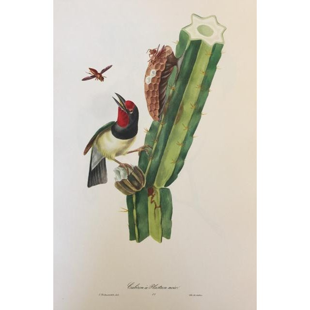 1st Edition Full Color Lithographs of Tropical American Birds - Set of 30 For Sale In Detroit - Image 6 of 13