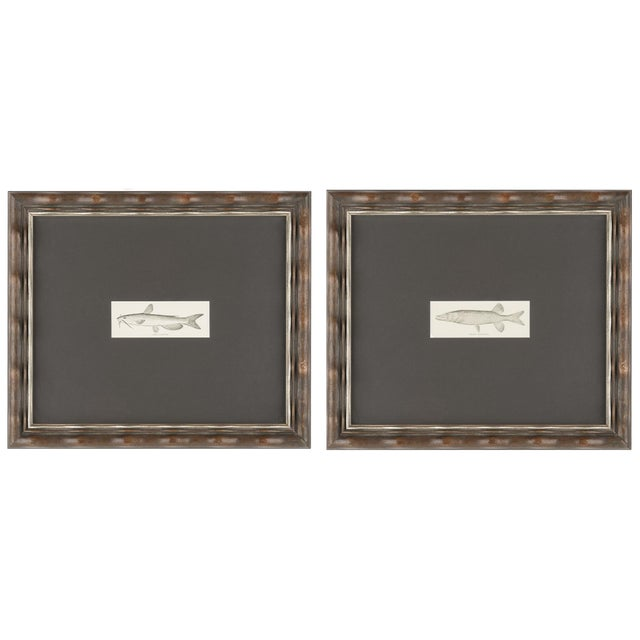 Framed Fish Prints- A Pair - Image 1 of 3