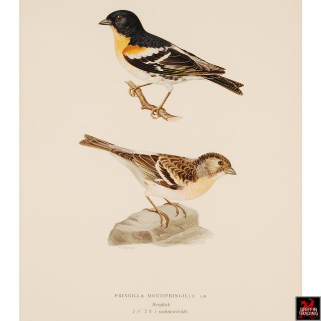 Glass Superb Collection of Antique Chromolithograph Prints of Birds 5404 For Sale - Image 7 of 13