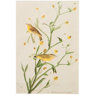 1966 Cottage Lithograph of Yellow Red-Poll Warbler by John James Audubon