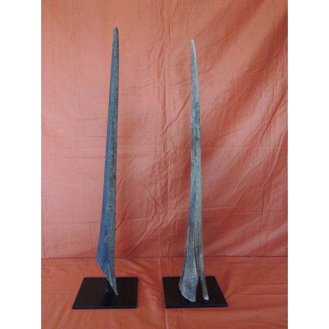 Vintage Pair of Marlin Fish Bills Mounted on Metal Stands From the Bahamas For Sale - Image 4 of 6