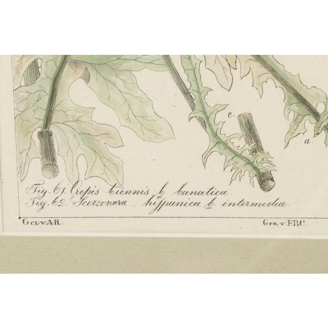 Wood 19th Century Hand-Colored Botanical Lithograph Pair For Sale - Image 7 of 10