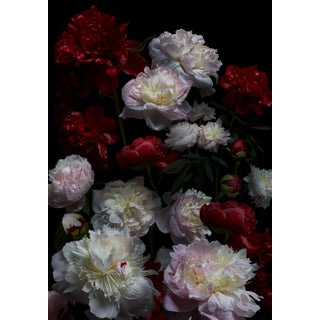 Peony Bouquet Photograph