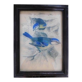 """W. H. Lazars """"The Blue Titmouse Birds"""" Reverse Engraving on Glass For Sale"""