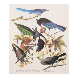 1960s Cottage Style Lithograph of Birds of America by Audubon