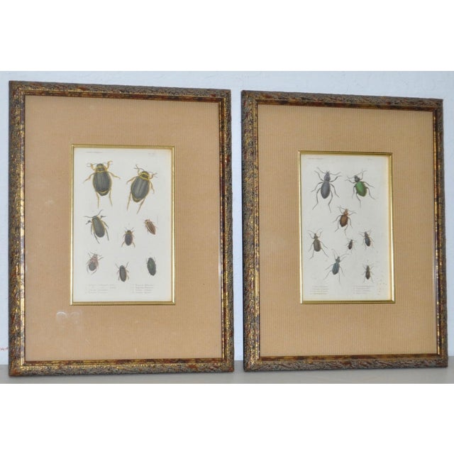 Pair of 19th Century Color Insect Plates Elegantly framed color prints of various insects c.1890s. Each print measures 7...