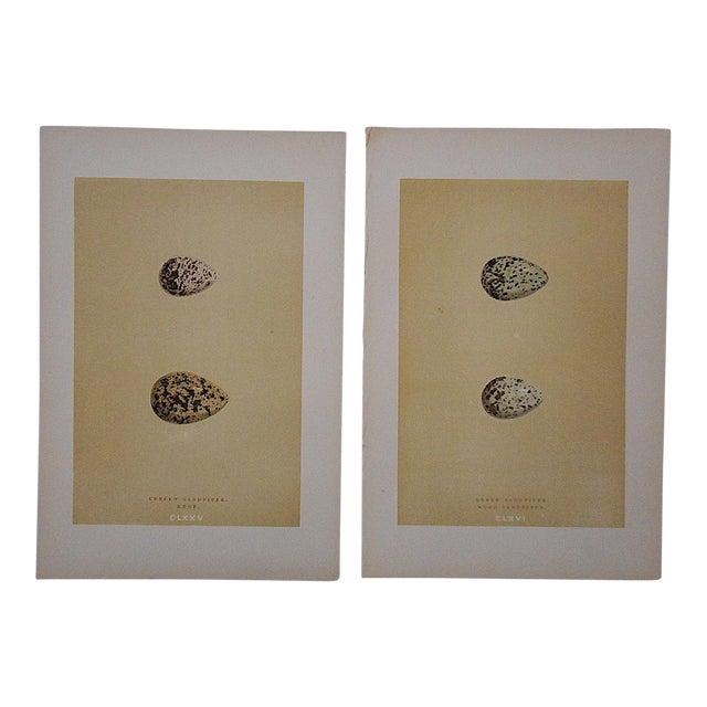 Antique Egg Lithographs-Set of 2-Sandpiper Eggs For Sale