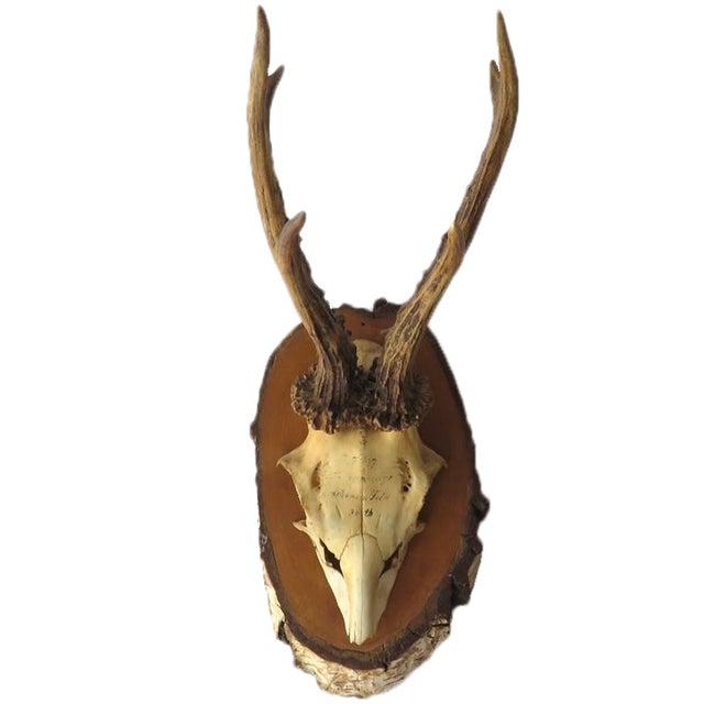 Vintage Roe Deer on Birch, 1937 - Image 1 of 7