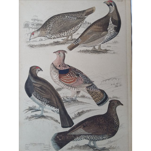 1850s Hand-Colored Bird Etchings - A Pair For Sale - Image 4 of 5