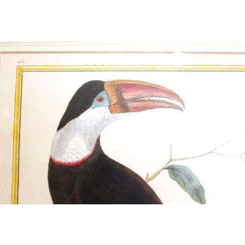"""Toucan"" Copper Plate Engraving - Image 2 of 7"