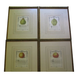 19th Century English Apple and Pear Prints in Giltwood Frames - Set of 8
