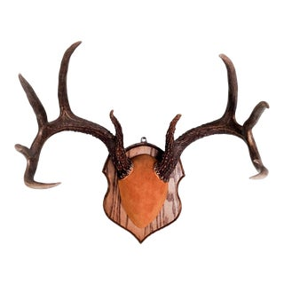 Deer Antler Mount For Sale