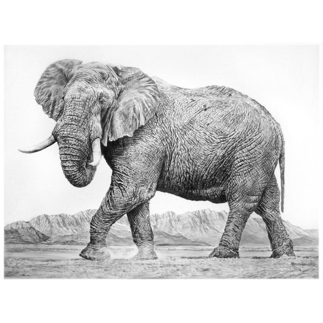 "Mid-Century Modern Contemporary ""Elephant Ii"" Rick Shaefer Charcoal Print For Sale - Image 3 of 3"