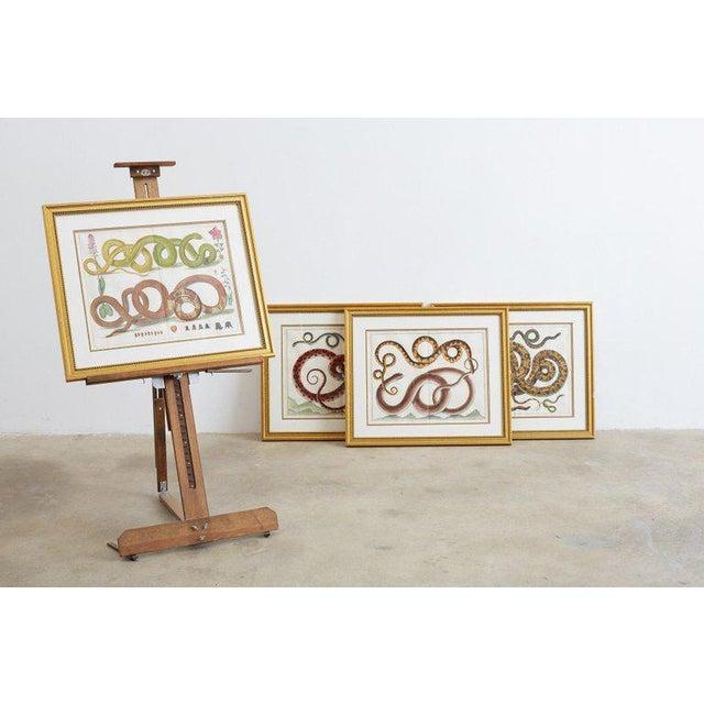 Set of Four Albertus Seba Hand-Colored Snake Prints For Sale - Image 10 of 13