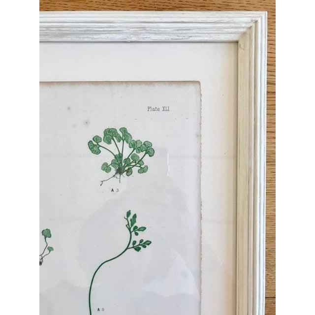 Rare process involving live specimens pressed into printing plates, circa 1855. Custom framing with conservation glass....