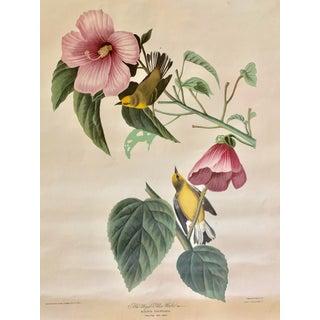 1950s Vintage Botanical Bird Print For Sale