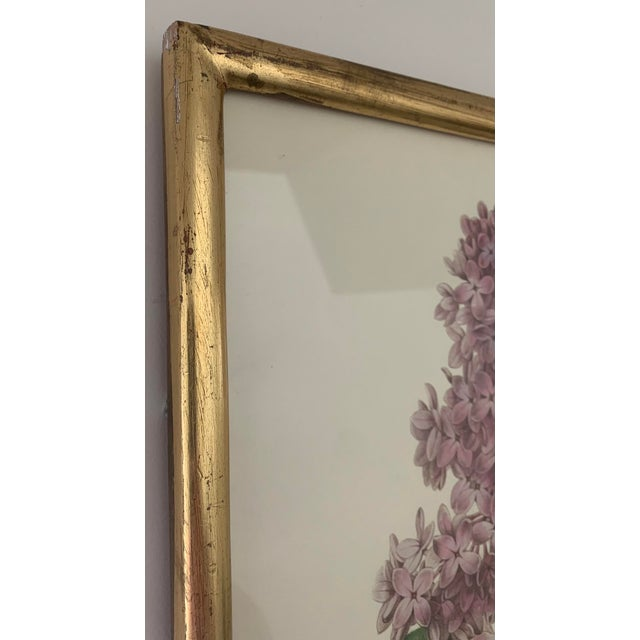 1990s Reproduction Antique Botanical Print Lilac Framed For Sale - Image 5 of 12