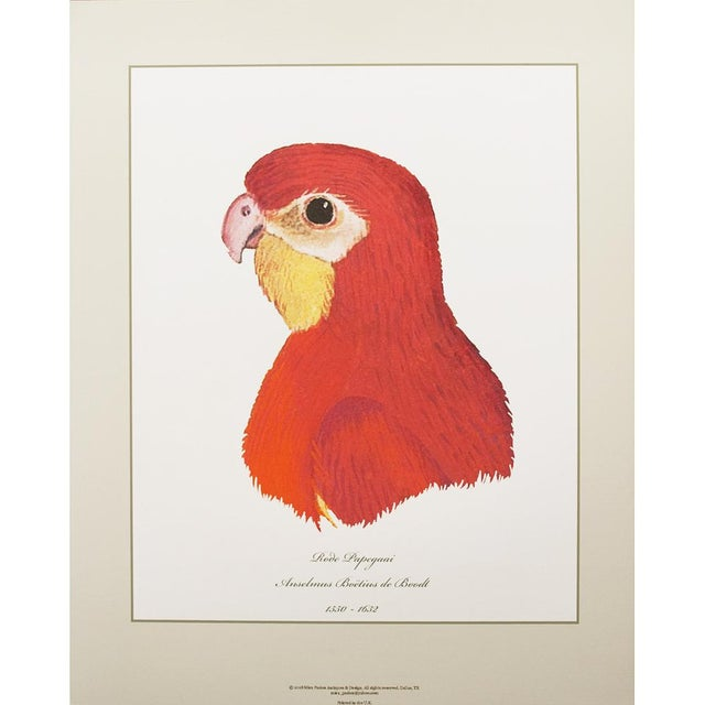 Printmaking Materials Anselmus De Boodt & Aert Shoumann, 16-18th C. Parrot Head Study Prints - Large Set of 6 For Sale - Image 7 of 10