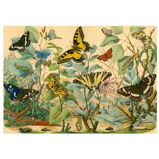 Antique 'Butterfly Garden' Archival Print