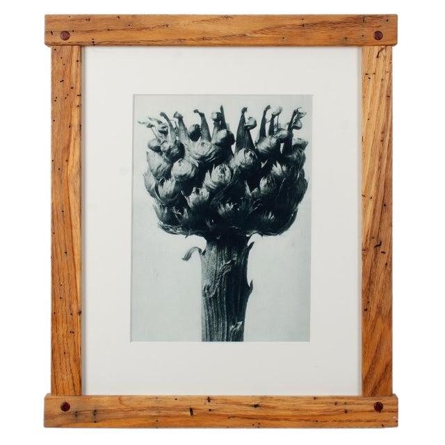 Karl Blossfeldt Photogravures in Handcrafted Wormy Oak Frames, C.1929 - Set of 5 For Sale In Savannah - Image 6 of 13