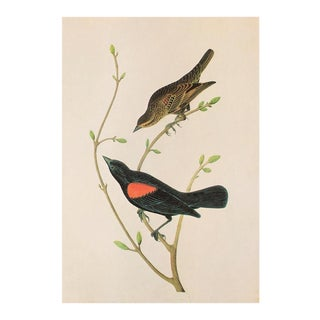 Crimson-Winged Troopial and Red-Winged Blackbird by Audubon, 1966 Vintage Chinoiserie Print For Sale
