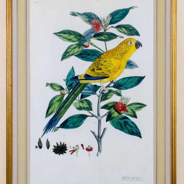John Frederick Miller (English, 1759-1796) Offered are four framed hand-colored engravings of birds from J.F. Miller's...