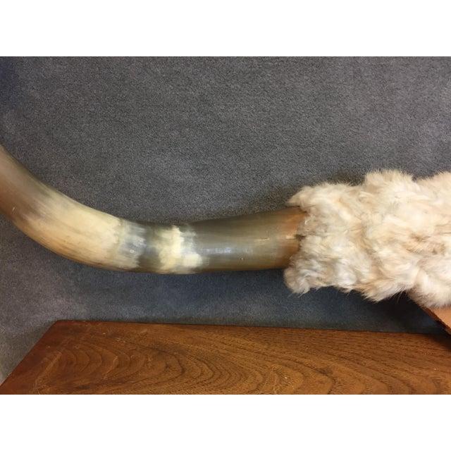 Vintage Longhorn Mounted Steer Horns - Image 3 of 11