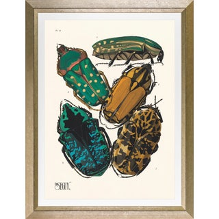 """Framed E. A. Seguy Print, """"Insects"""" Plate No. 12 For Sale"""