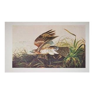 XL Audubon Print of Winter Hawk, 1966