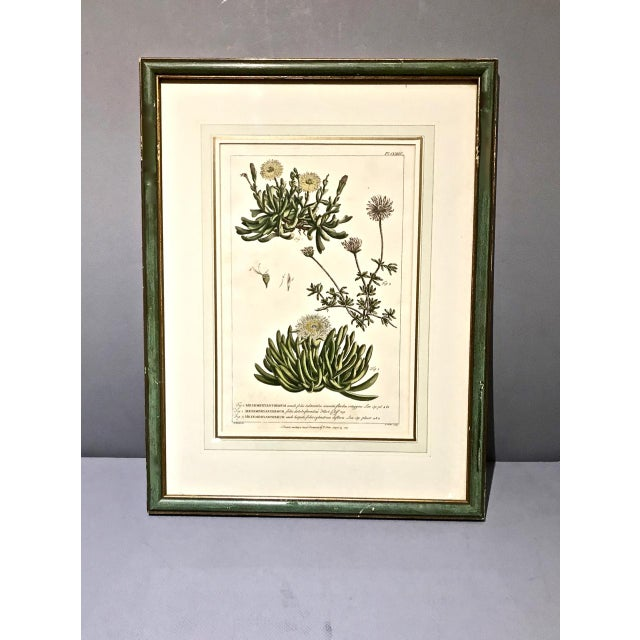 18th C. Botanical Engravings - Set of 4 For Sale In Los Angeles - Image 6 of 10