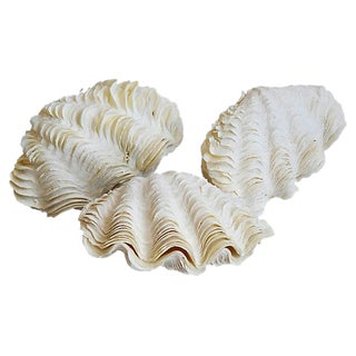 Natural Ruffled Edge Full Clamshells - Set of 3