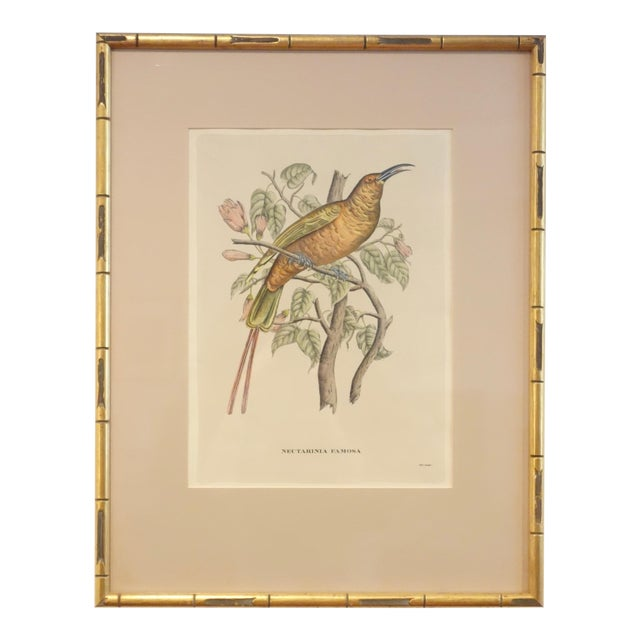 Antique Bird Print by J. Gould, Circa 1875 For Sale