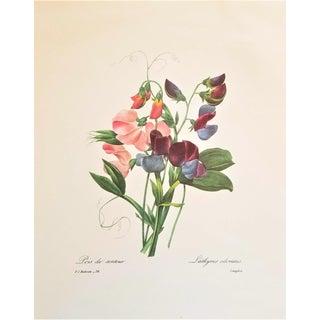 Pierre-Joseph Redouté Reproduction Snap Drago Botanical Print For Sale