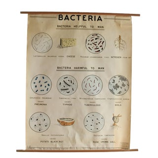 1960s Vintage Welsh Scientific Company School Bacteria Poster For Sale