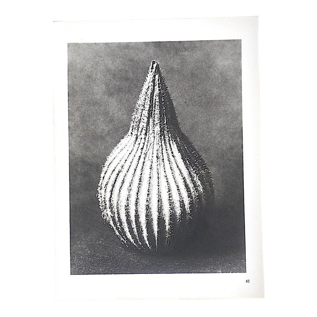 Vintage Modernist Botanical Photogravures By Karl Blossfeldt-Extreme Close-Ups Of Flora c.1942 For Sale