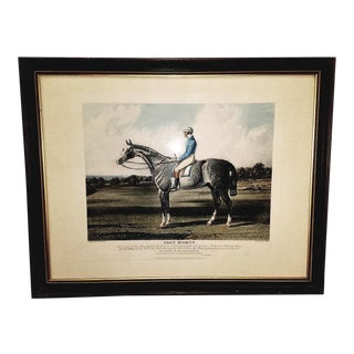 19th Century Aquatint Engraving of Grey Momus by John Frederick Herring Snr For Sale