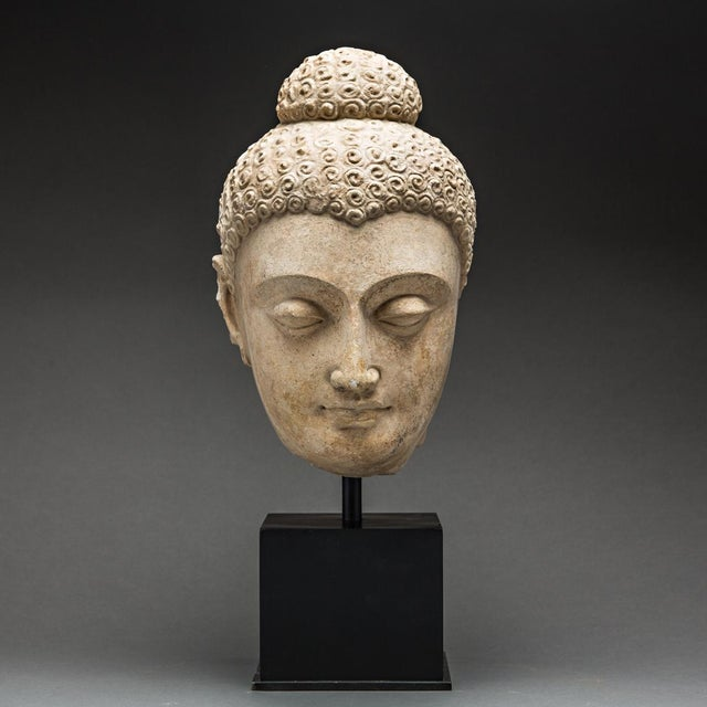 Asian Gandhara Stucco Head of a Buddha For Sale - Image 3 of 3