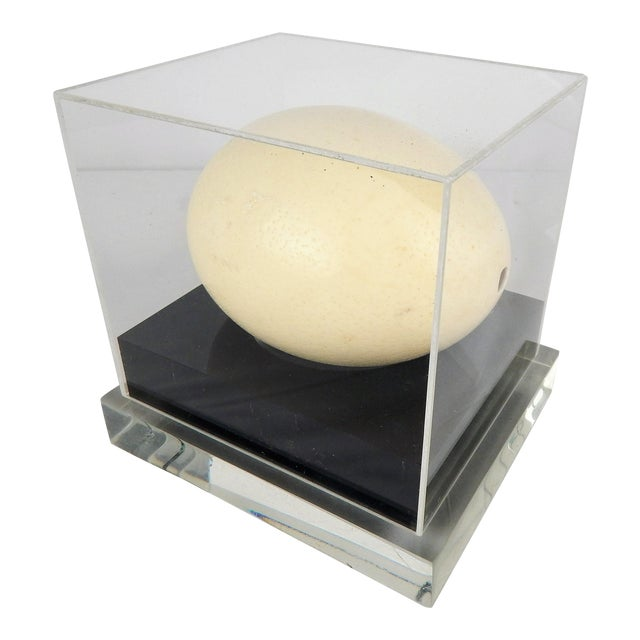 Lucite Display Case With Ostrich Egg For Sale