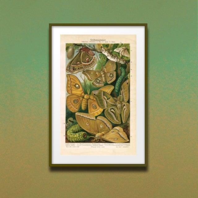 Vintage Moths & Caterpillars Archival Print - Image 3 of 3