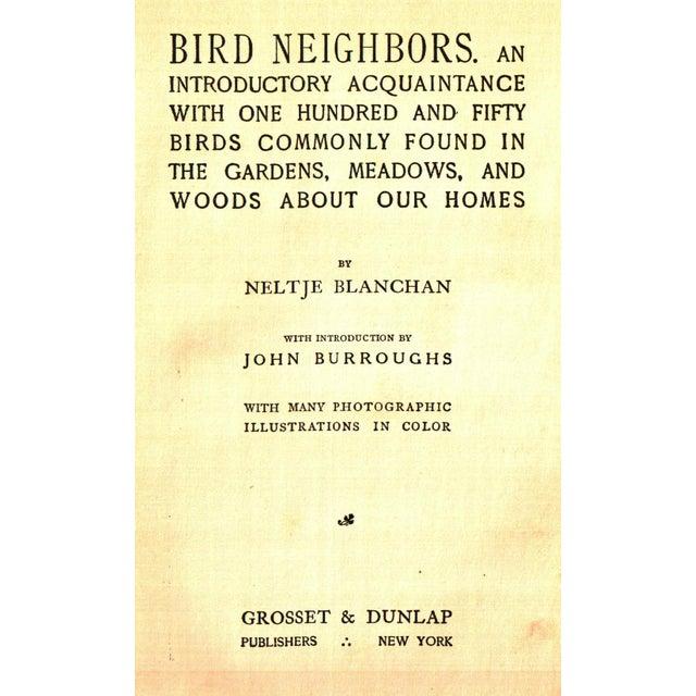 the bird table book in colour