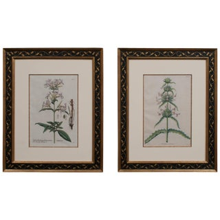 Pair of Hand-Colored Botanical Engravings of Lilies For Sale