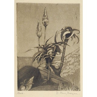 Desert Aloes Etching For Sale