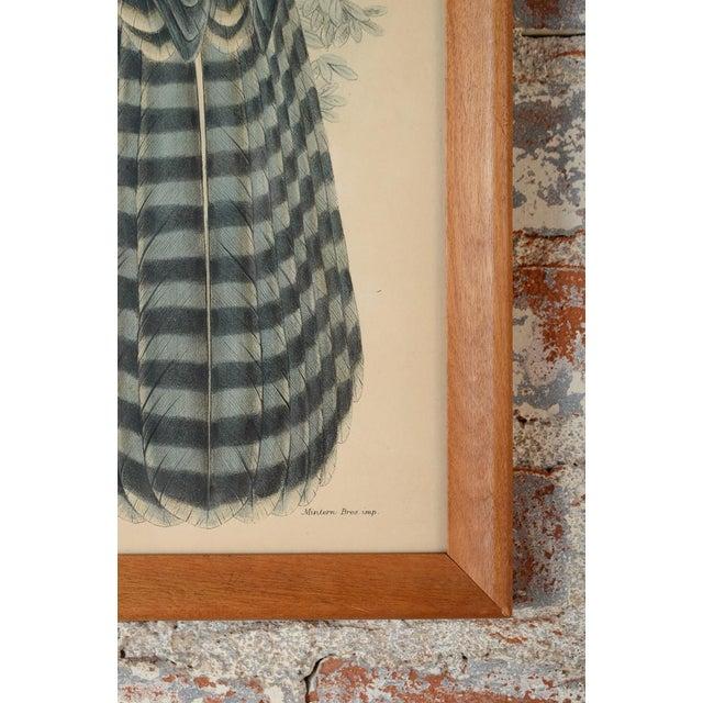 "John Gould ""Erythrotriorchis Dorlae"" Bird Lithograph - Image 6 of 7"