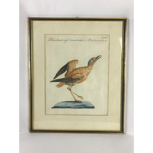 Late 18th Century 18th Century Courser Bird Print Hand Colored Engraving by Saverio Manetti For Sale - Image 5 of 5