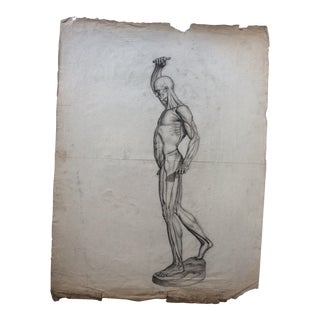 Antique Anatomical Human Muscular Structure Drawings Set of 6 For Sale