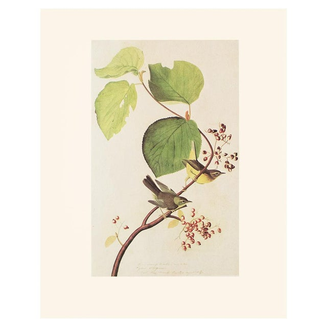 A lovely vintage Cottage or Farmhouse Style reproduction of the original lithographic print of Pine Swamp Warbler by John...