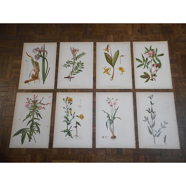 Antique 19th Century Botanical Lithographs - Set of 8 For Sale In Cincinnati - Image 6 of 7