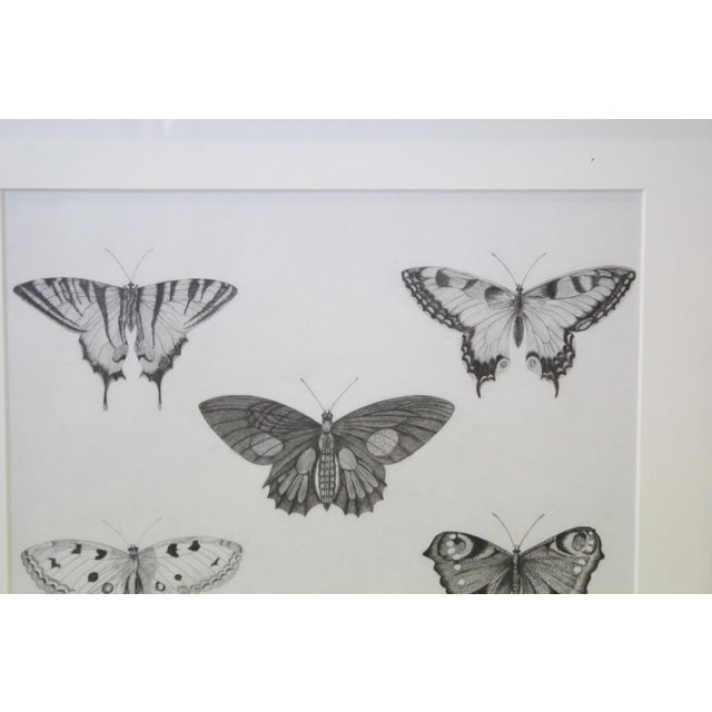 Late 20th Century Black and White Butterflies Sketch For Sale - Image 5 of 10