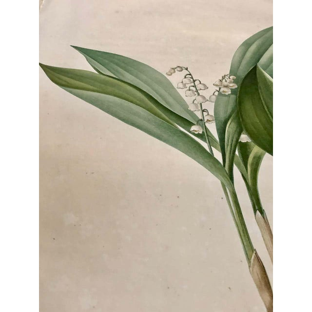 Mid 19th Century Convallaria Majalis Print Hand Colored Engraving Signed p.j. Redoute For Sale - Image 5 of 13