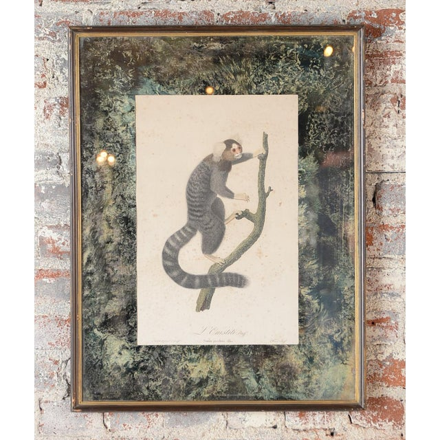 18th-C. Colored Monkey Print by Jean Baptiste - Image 7 of 10